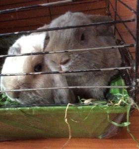 Кролики, отдам в хорошие руки