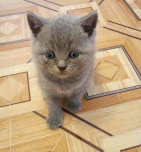 милые котятки ищут новых хозяев