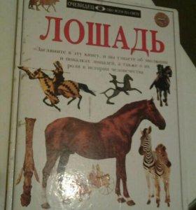 Книга о лошадях/про лошадей