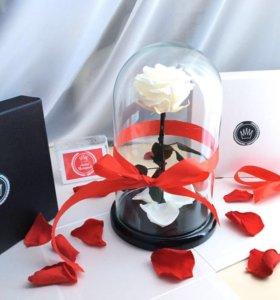 Белая Роза в колбе 🌹