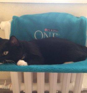 Лежак для кошки на батарею