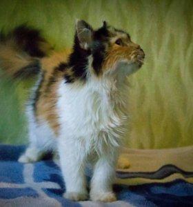 Кошка 5 месяцев