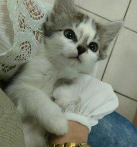 Котята в добрые руки!