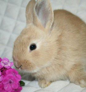Карликовый кролик. Большой выбор