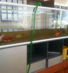Клининг Вашего аквариума от 300литров
