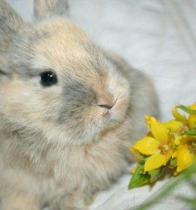 Полосатая девочка. Есть и другие крольчата