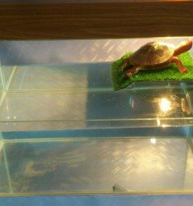 Аквариум для черепахи (террариум для черепах)