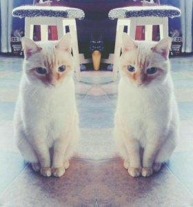 Добрый и ласковый котик