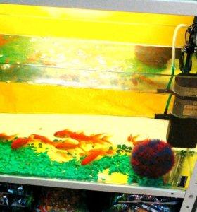 Прудовые рыбки
