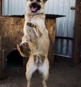 Собака Буся охранник и друг