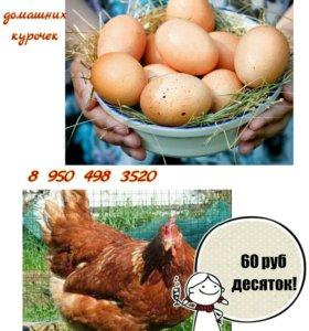 Куриное яйцо от домашних курочек