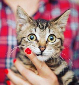 Котенок (девочка 3 мес)