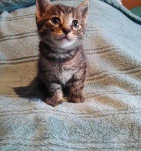 Котенок (мальчик)
