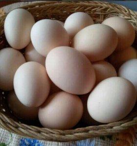 🐣Яйца свежие молодых домашних курочек