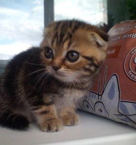 Котята красивые