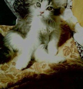 Кот (2мес)
