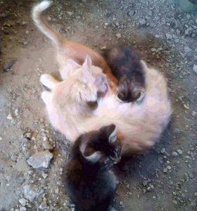 Шустрый котёнок в добрые руки