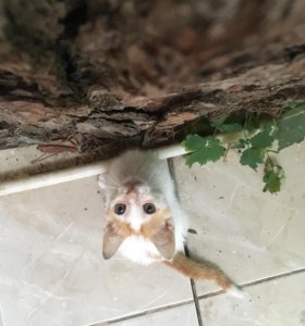 Отдадим котёнка