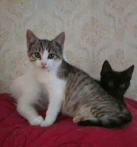 Красивые и умные котята в добрый дом