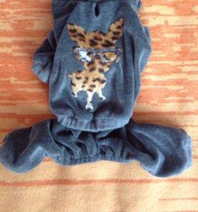 Велюровый костюмчик Чихуахуа размер S