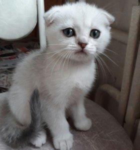 """Котята из рекламы """"Вискас"""""""