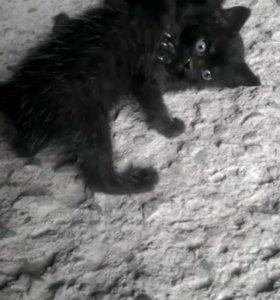 Бесплатно, Котята все Чёрные