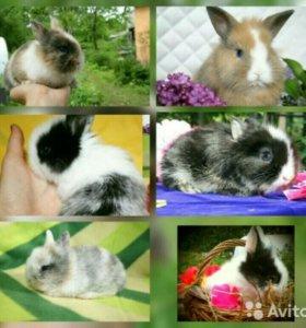 Карликовые крольчата, привиты.есть клетки
