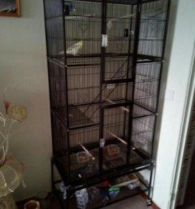 продам попугая карелла + клетка