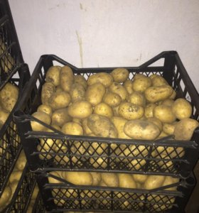 Картофель 🥔