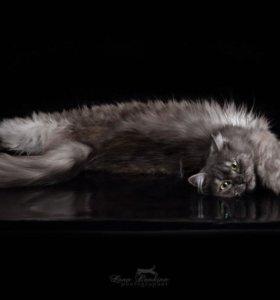 Кошка ( помесь)