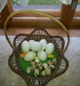 Яйца куринные и перепелинные