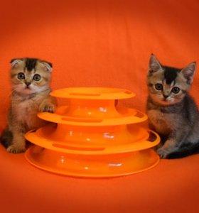 Модные котики и кошечки в тиккированных шубках