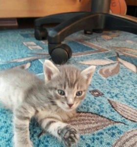 Котята, кошки мышиловки