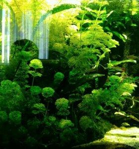 Трава для аквариума