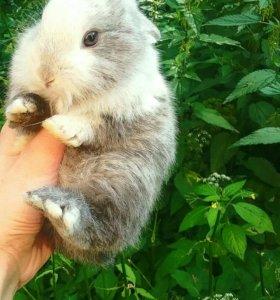 Серый карликовый кролик с клеткой