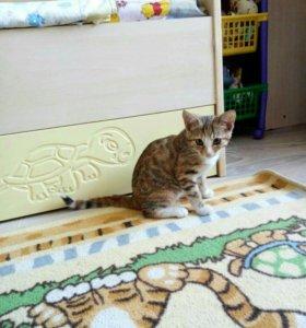 Найдена кошечка в октябрьском районе на юшкова
