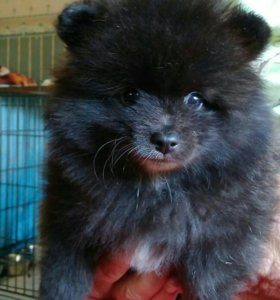 Медвежонок!