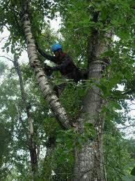 Удаление и кронирование деревьев.