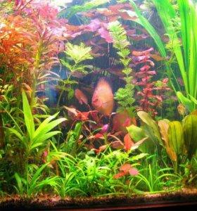 Удобрения Sera florenette для аквариумных растений