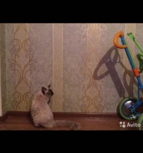 Жених.Невский маскарадный кот