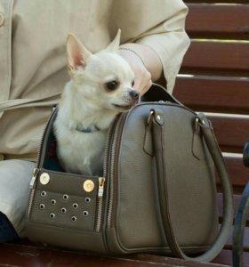 Кожаная сумка переноска для маленьких собак