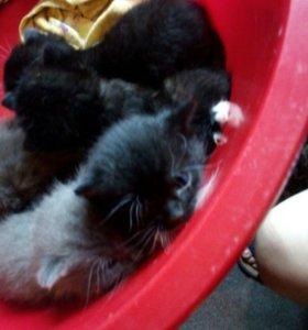 Котята малышата