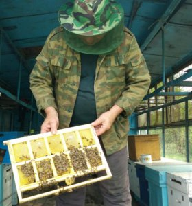 Продаётся мёд (разнотравье и кориандровый)
