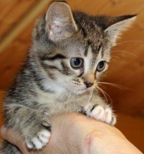 котёнок-девочка в добрые руки