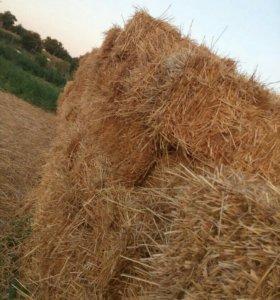 Солома пшеничнаю