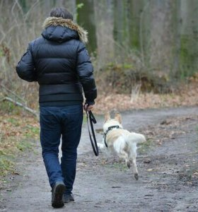 Выгул собачек