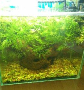 Продам аквариум с креветками