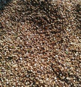 Шиповник (семена)