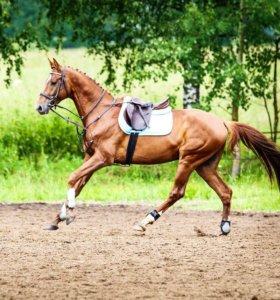 Аренда лошади