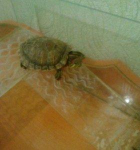 2 черепахи и аквариум + корм
